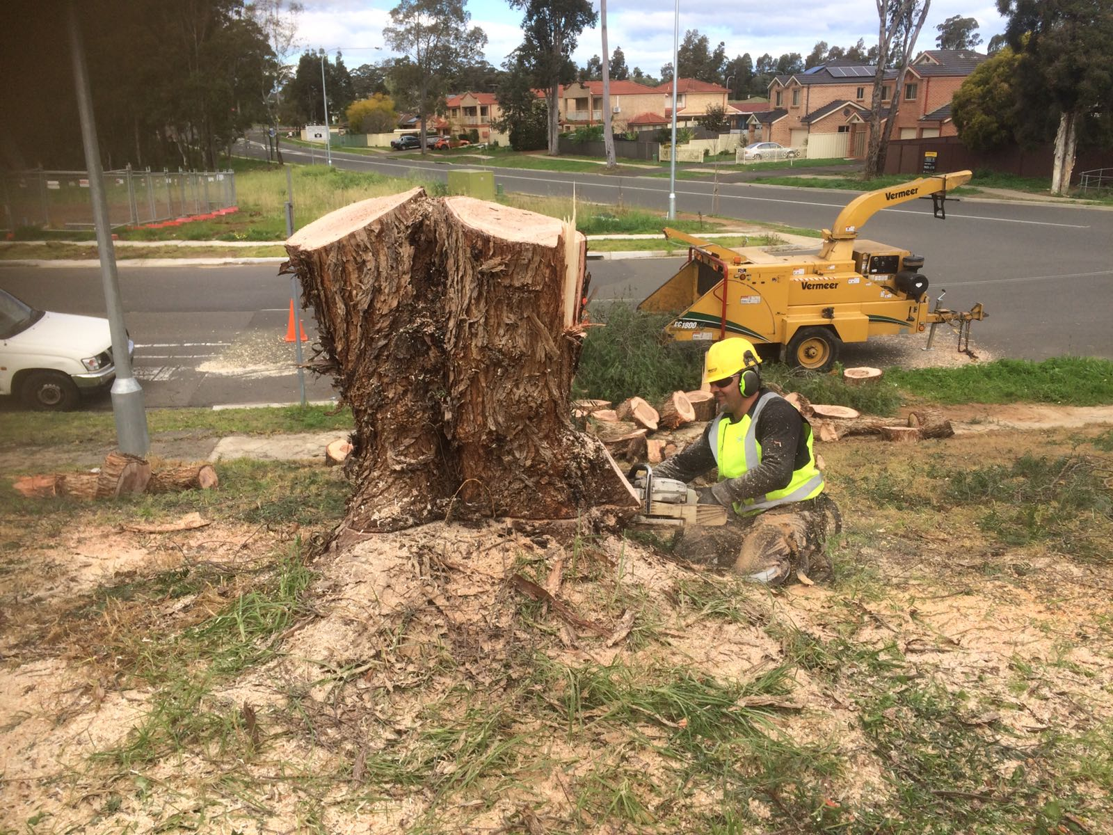Tree Care Services from a Licensed Experts